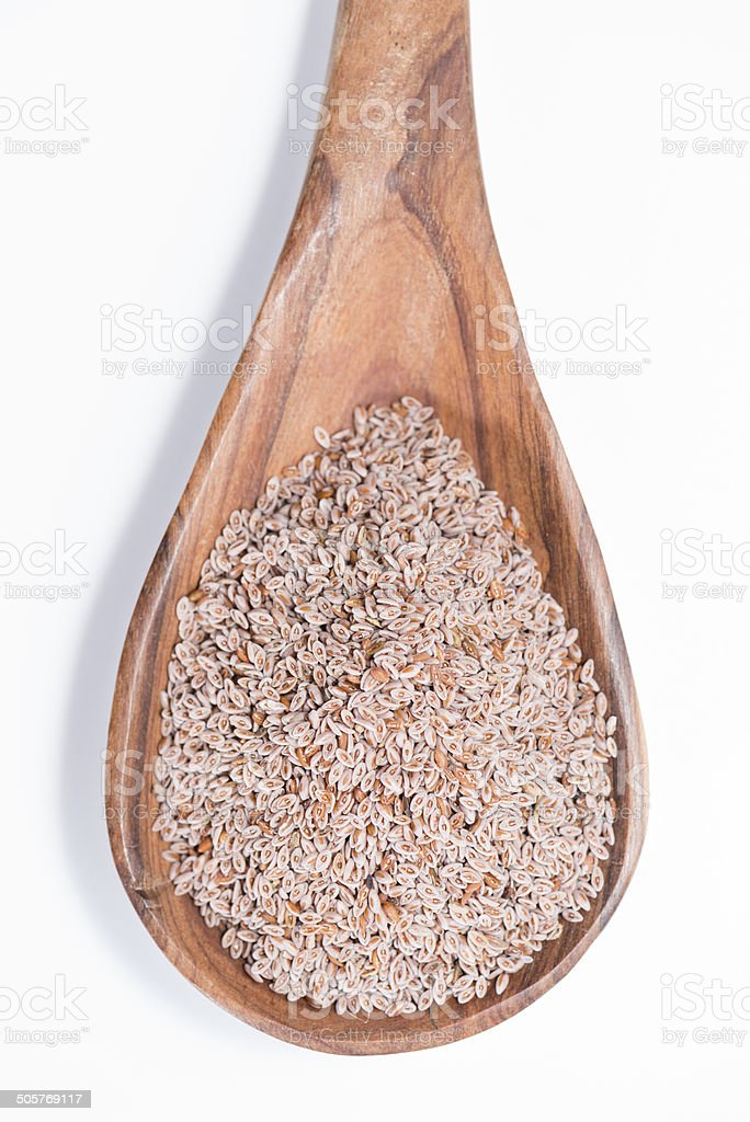 Isolated Psyllium stock photo