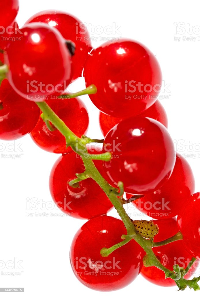 Isolated red currant royalty-free stock photo