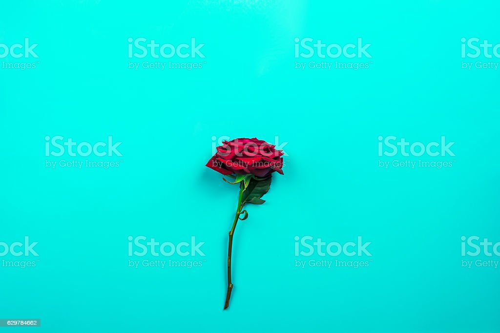 Isolated Red Rose on Vintage Green Background stock photo