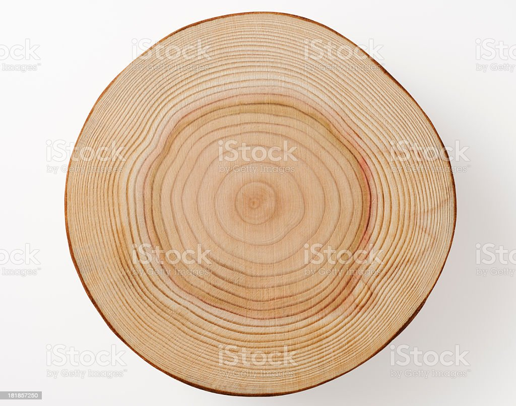 Isolated shot of tree cross section on white background royalty-free stock photo