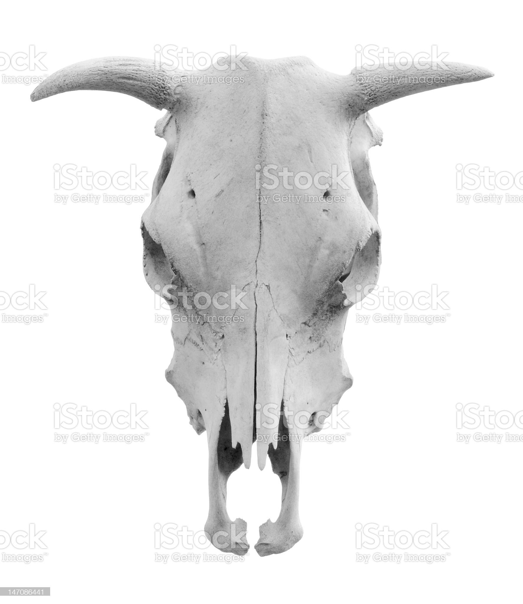 Isolated Skull royalty-free stock photo
