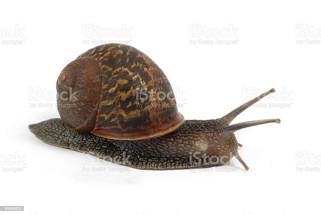 Isolated Snail stock photo