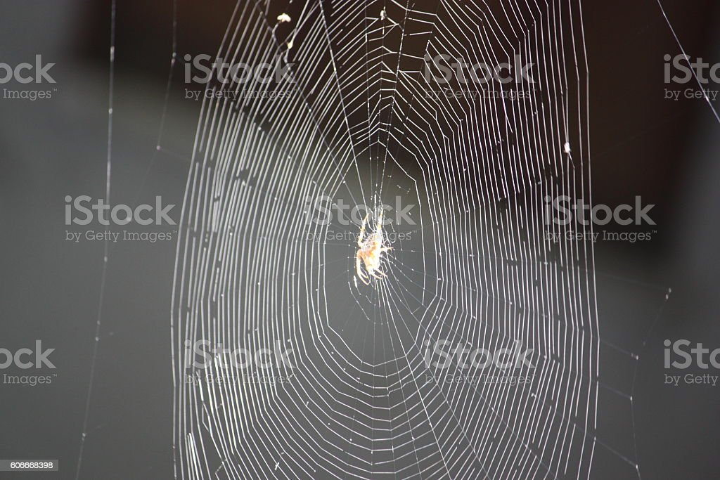 Isolated spider in the middle of Cobweb stock photo