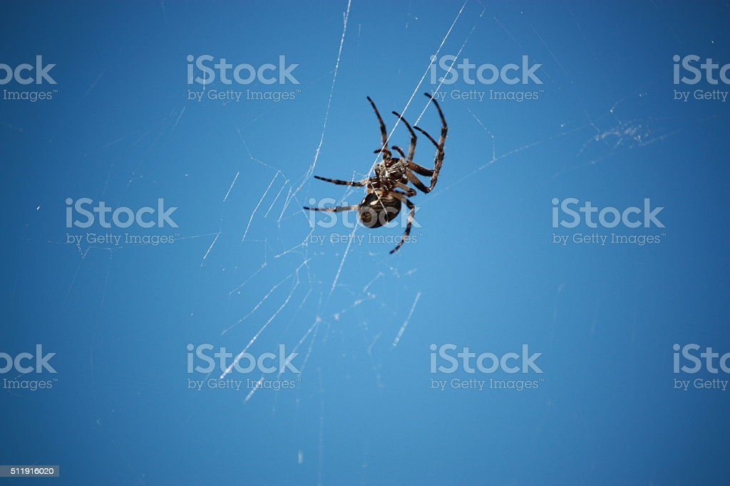 Isolated spider under blue sky stock photo