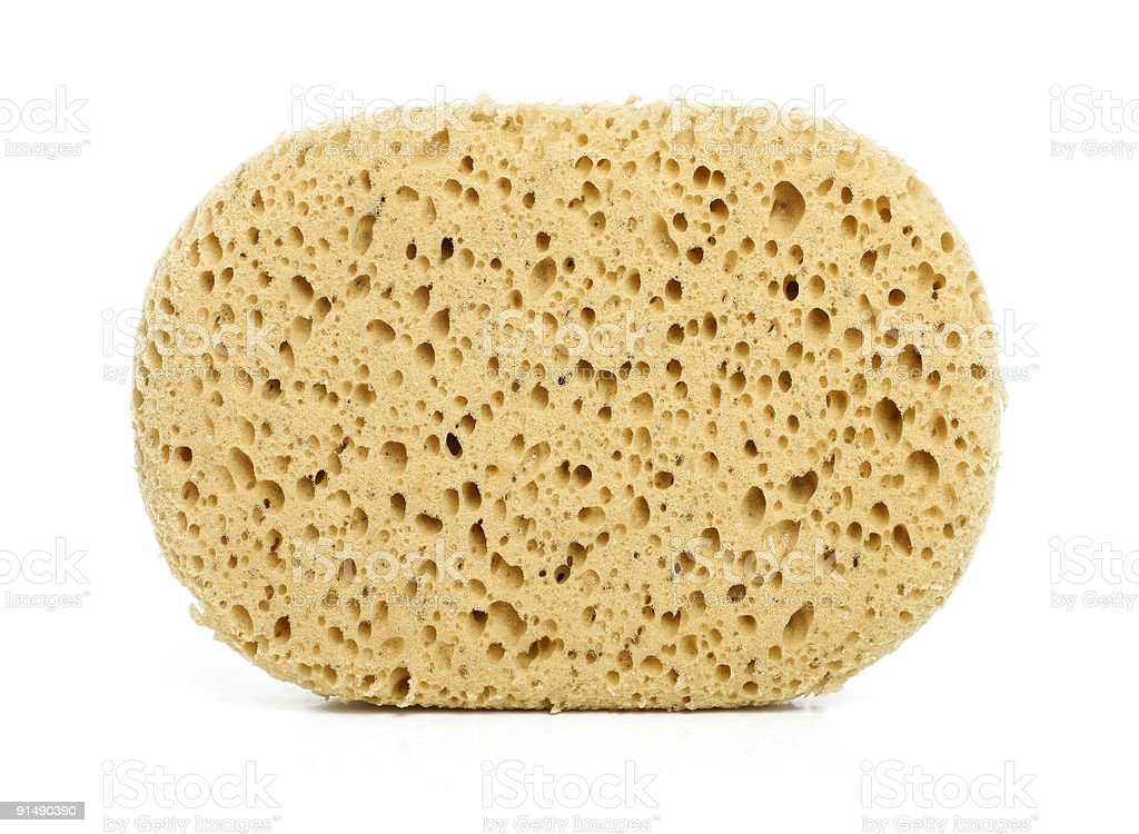 isolated sponge stock photo