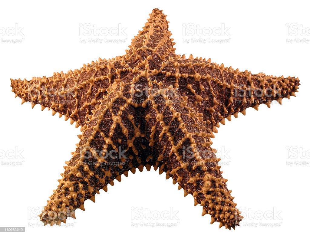 Isolated Star Fish royalty-free stock photo
