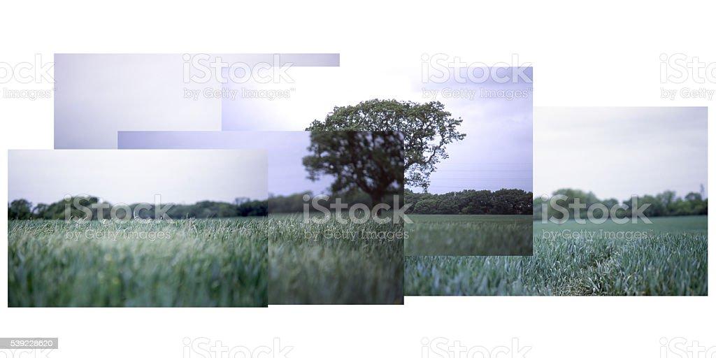 Isolated tree college stock photo