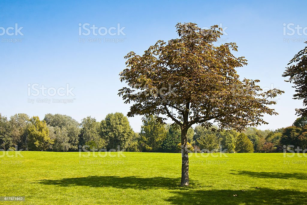 Isolated tree in a green meadow stock photo
