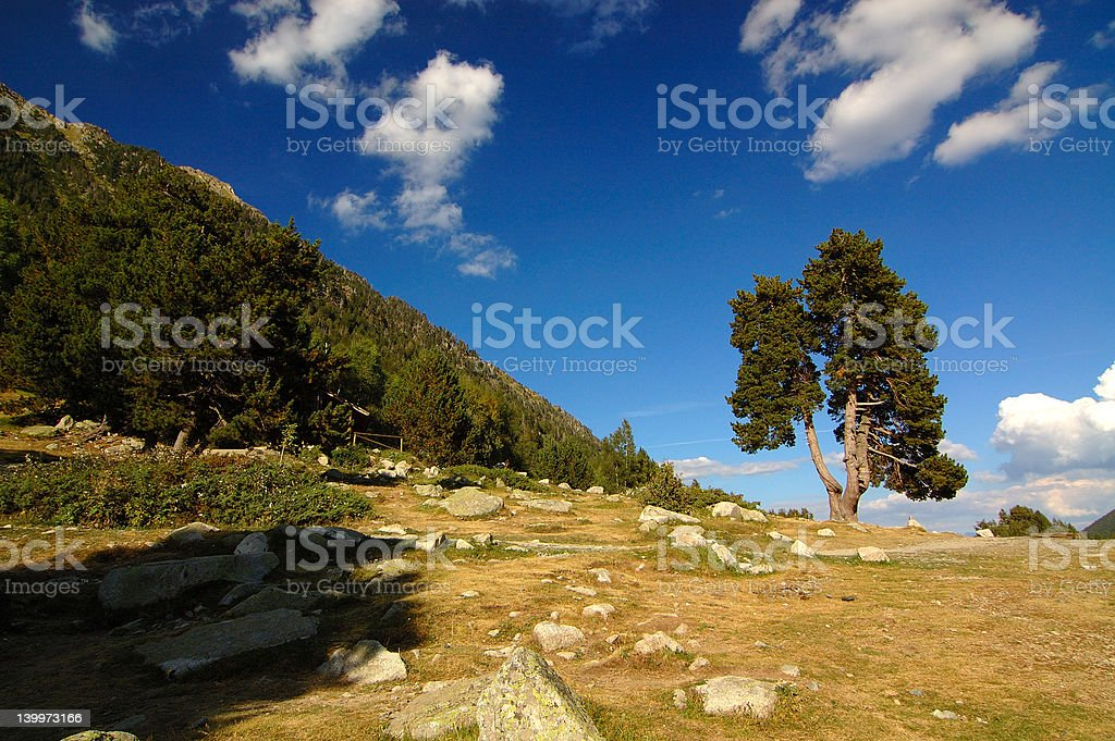 Isolated tree in Aigüestortes Park stock photo