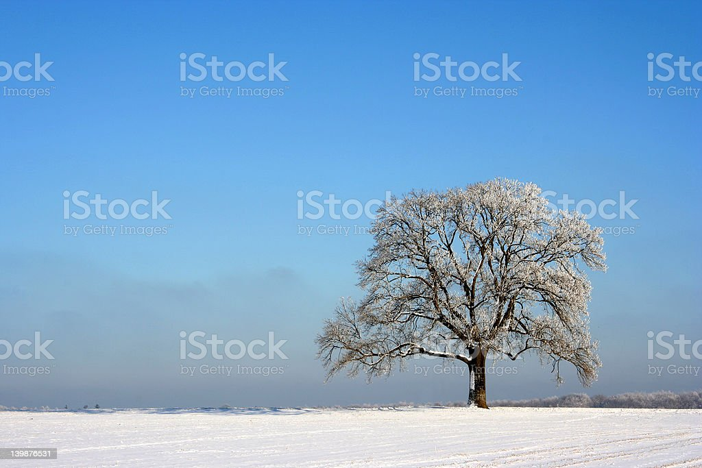 Isolated tree in winter royalty-free stock photo