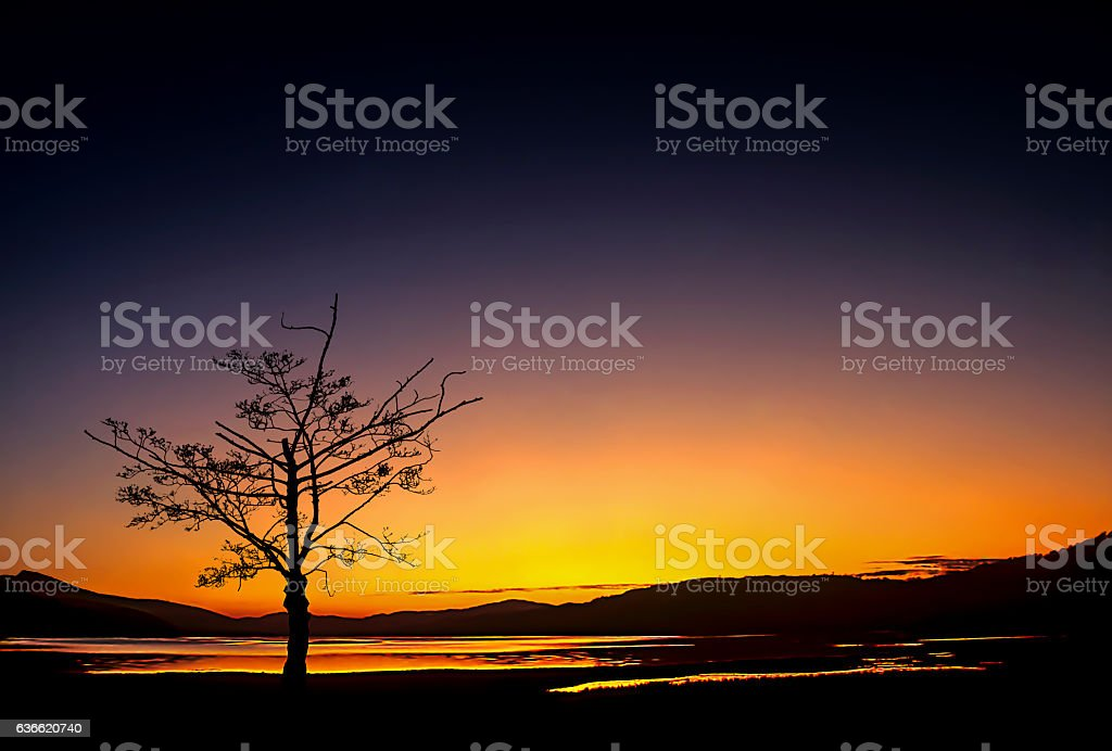 Isolated Tree Lake Bala Norrth Wales stock photo