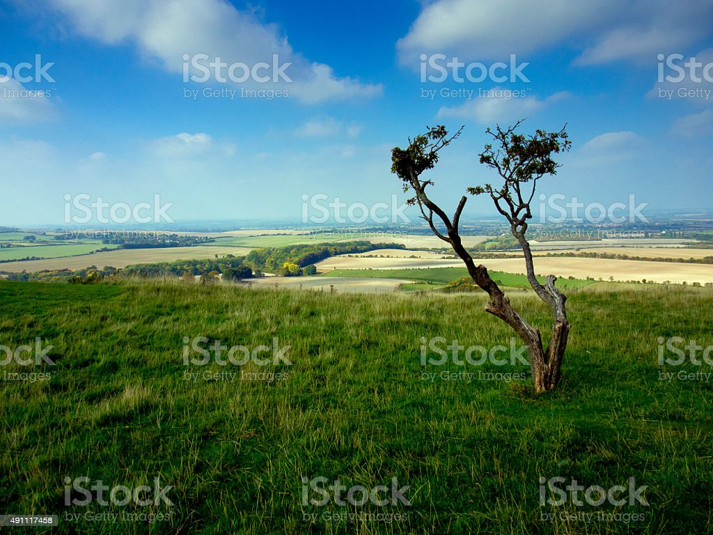 Isolated tree overlooking Dunstable downs stock photo
