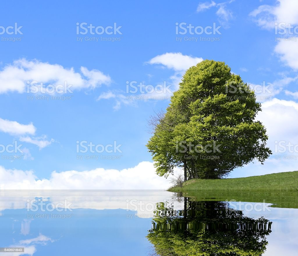 isolated tree with the alpine lake and the thick foliage stock photo