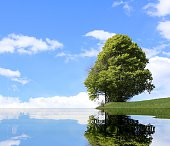 isolated tree with the alpine lake and the thick foliage