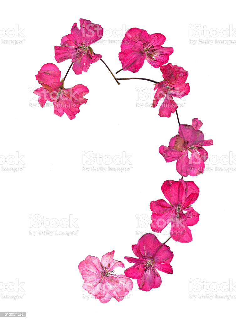 Isolated wave line pink geranium, collection of elements applica stock photo