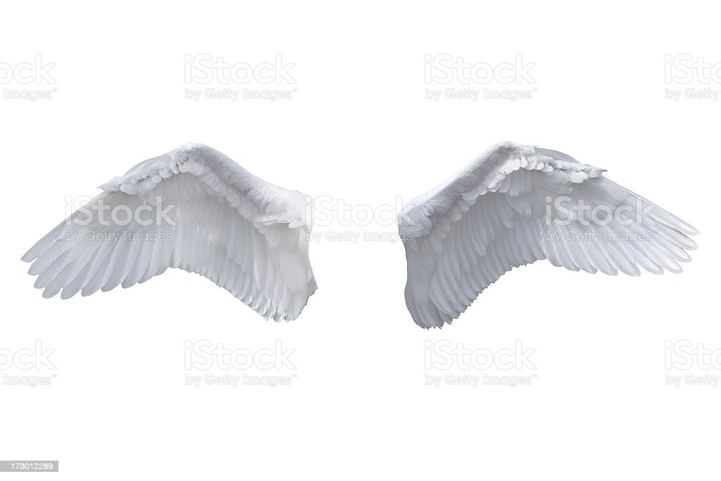 Isolated White Angel Wings stock photo