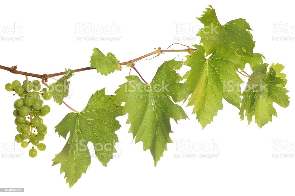 Isolated wine stock photo