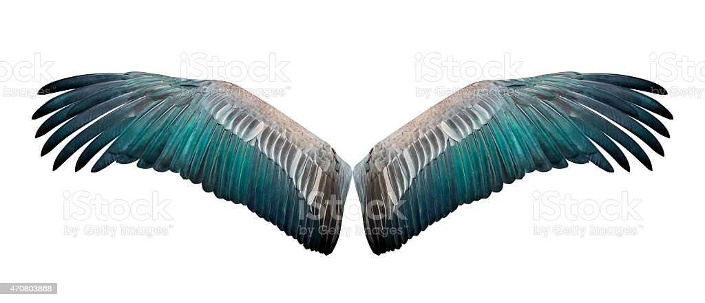 Isolated wing stock photo