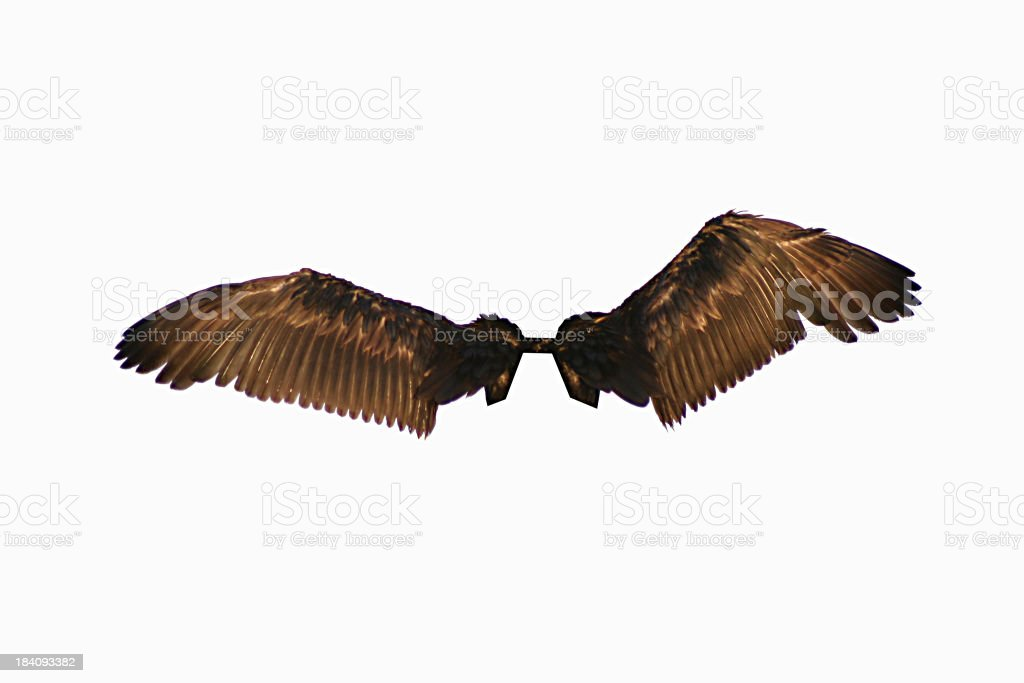 Isolated Wings stock photo