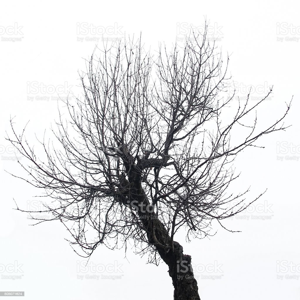 Isolated winter tree silhouette stock photo