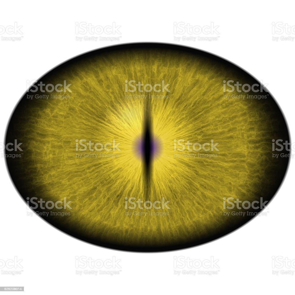 Isolated yellow eye. Yellow green striped iris around yellow retina stock photo