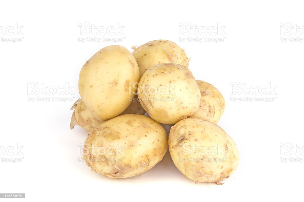 isolated young potato stock photo