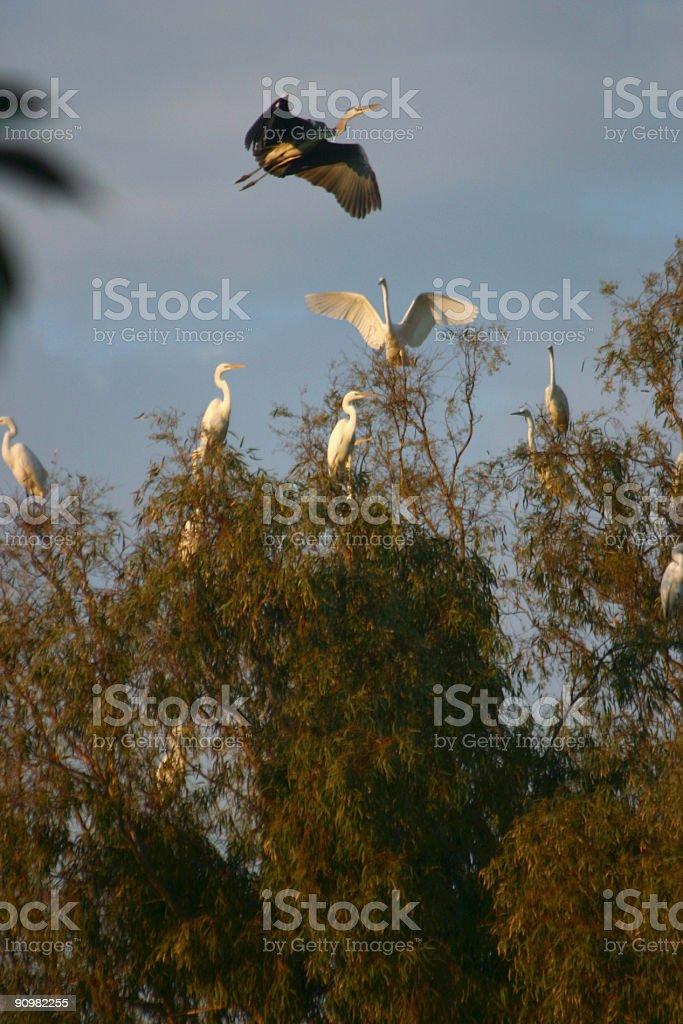 Israel Heron Bird Migration stock photo