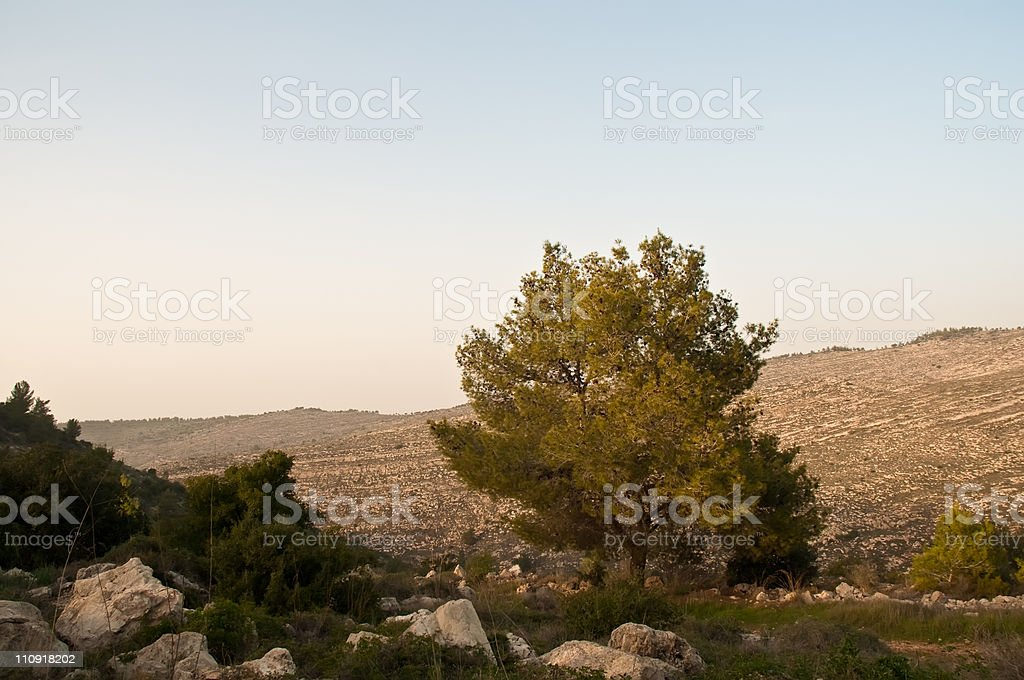 Israeli winter. royalty-free stock photo