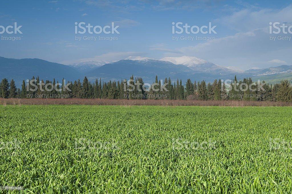Israel-Lebanon border royalty-free stock photo