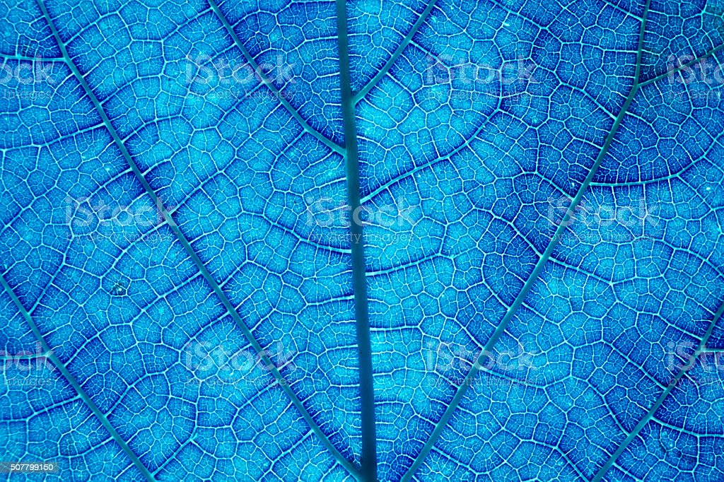 It is Design on leaf texture for pattern and background. stock photo