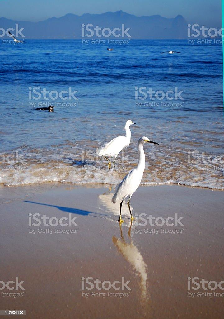 Itaipu beach and the seagulls royalty-free stock photo