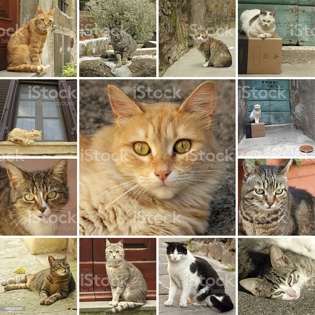 italian cats collage stock photo