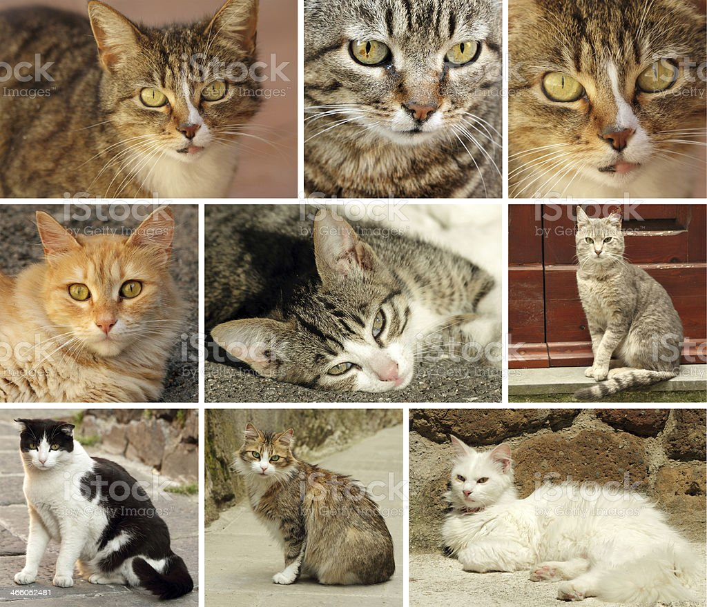 italian cats collection stock photo