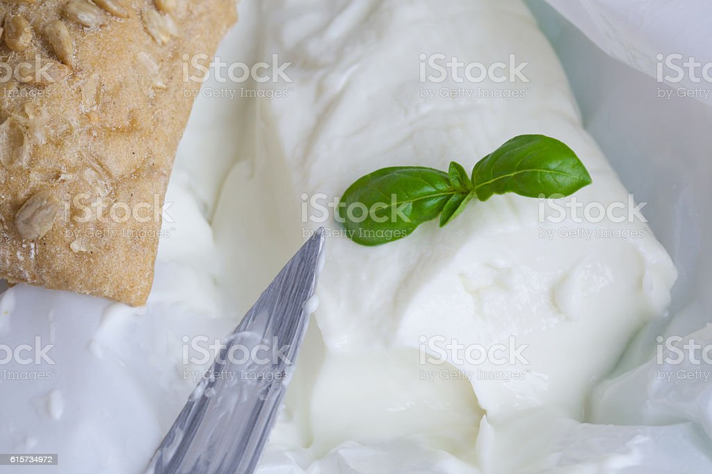 Italian cheese - stracchino with basel leaves. Closeup stock photo