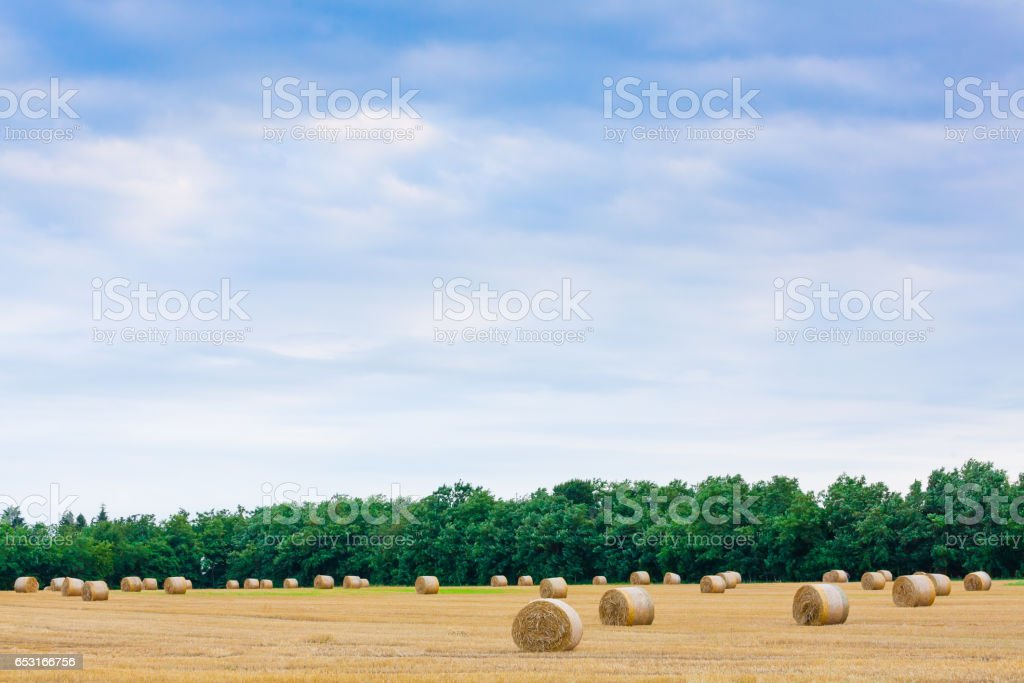 Italian countryside panorama. Round bales on wheat field stock photo
