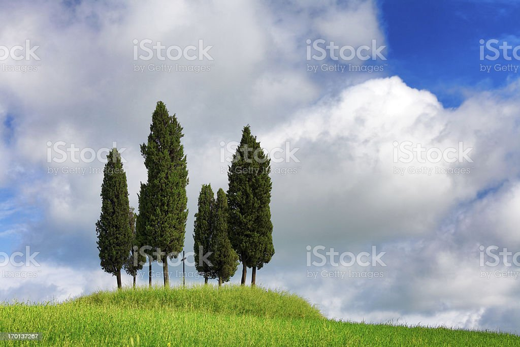 italian cypresses in the spring royalty-free stock photo