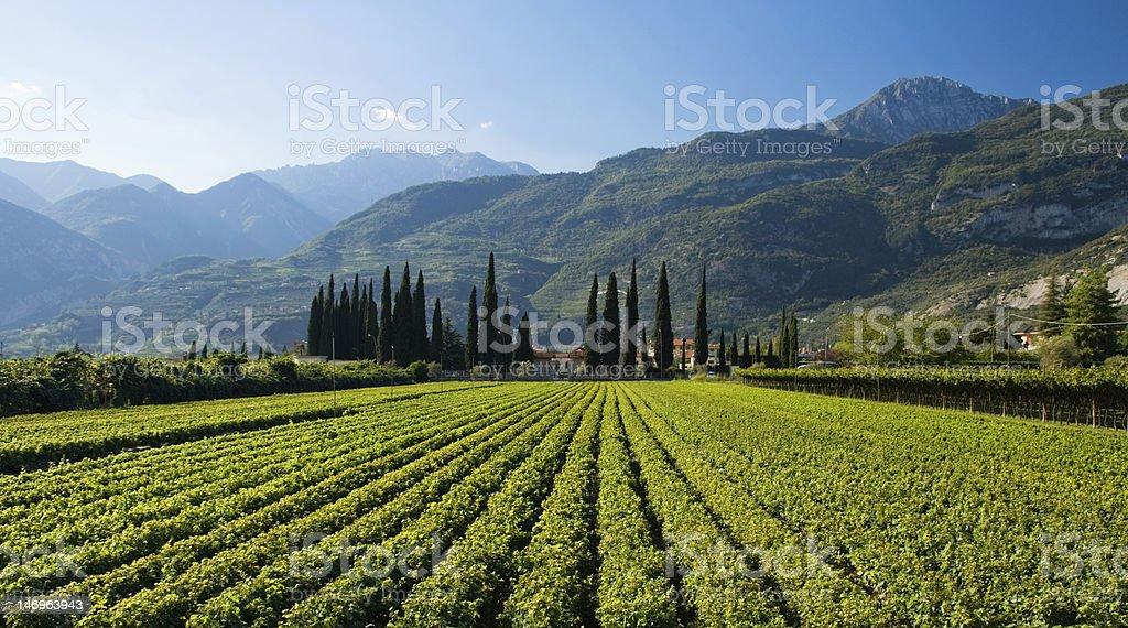 Italian Farm royalty-free stock photo