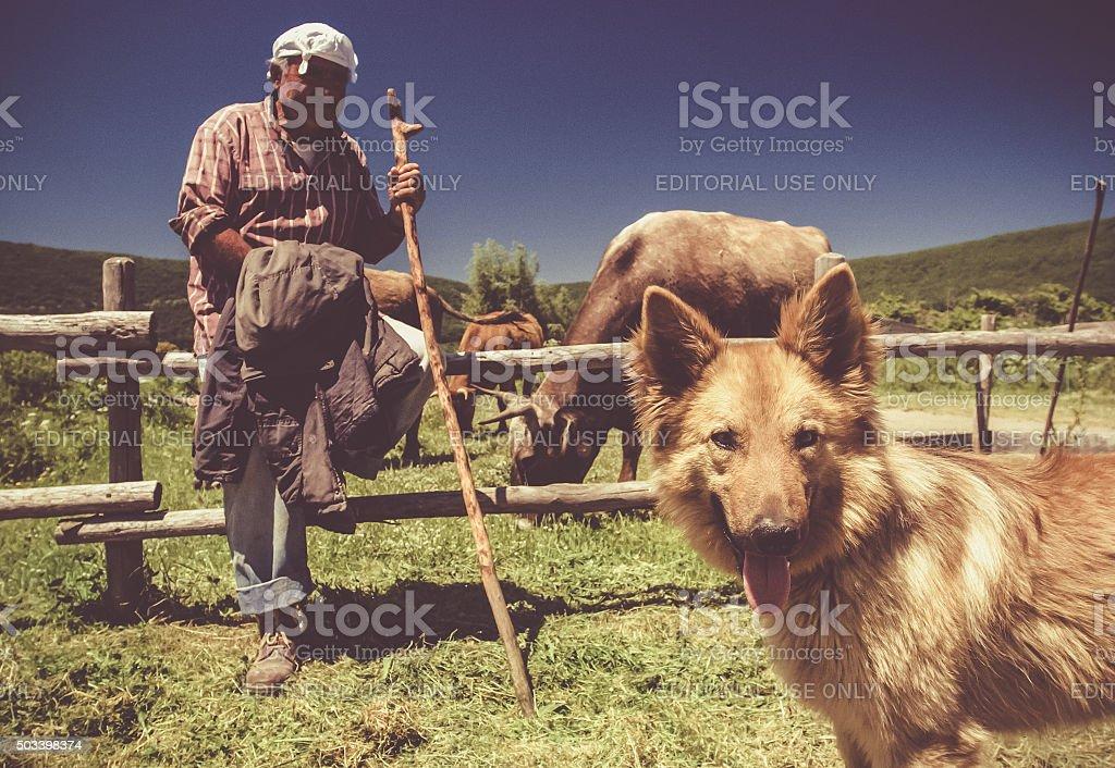 Italian Herdsman with his Shepherd Dog stock photo