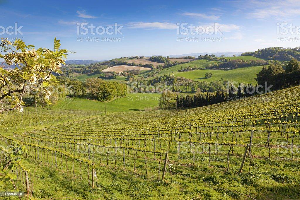 Italian landscape royalty-free stock photo