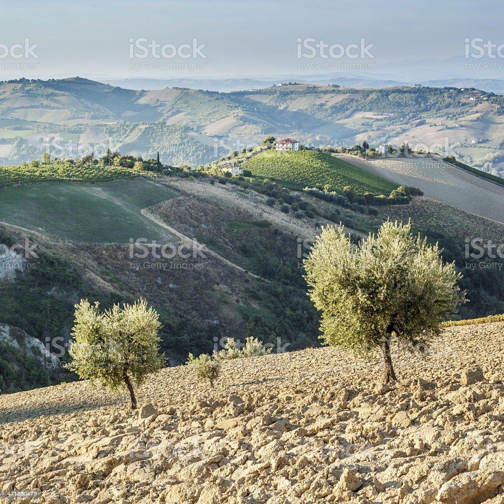 Italian Landscape, Square royalty-free stock photo