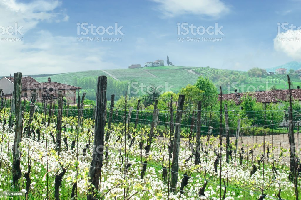 Italian landscape with a vineyard and an old farm, Piedmont, Italy stock photo