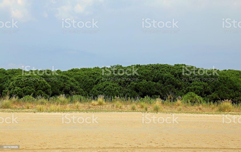 italian maquis shrubland in summer stock photo