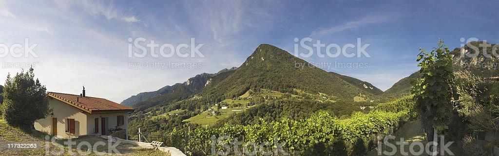 Italian mountain vineyard. royalty-free stock photo