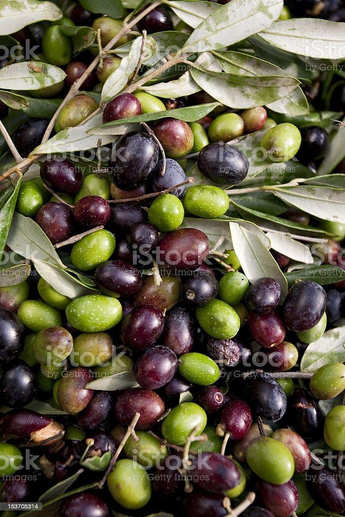 Italian Olives Variety stock photo