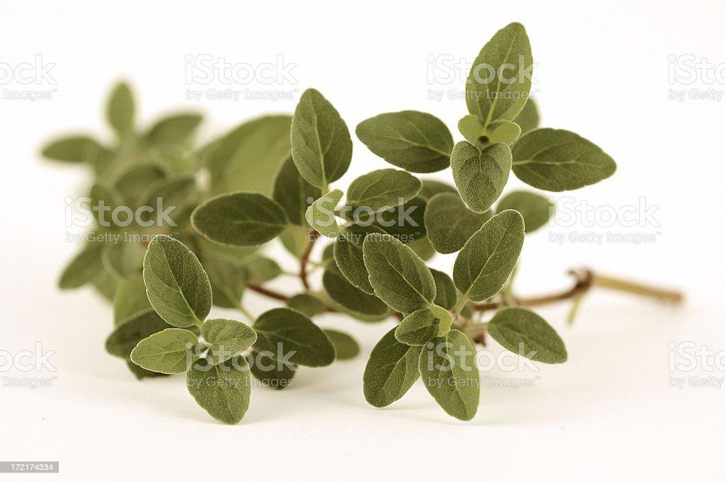 italian oregano stock photo