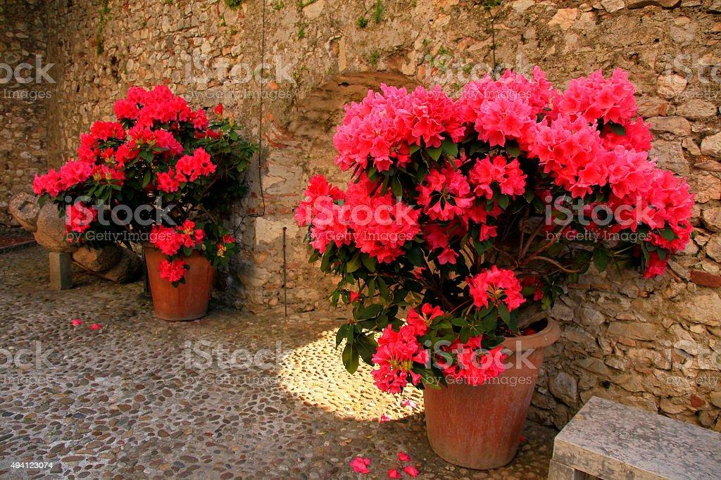 Italian patio garden: geranium vases, medieval walls entrance, Malcesine, Garda stock photo