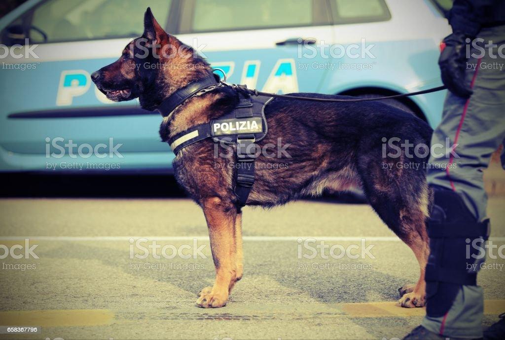 italian police dog stock photo