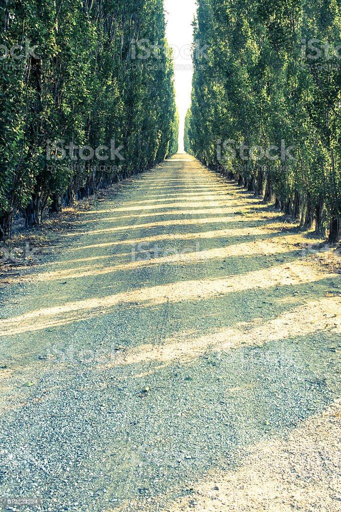 italian road stock photo