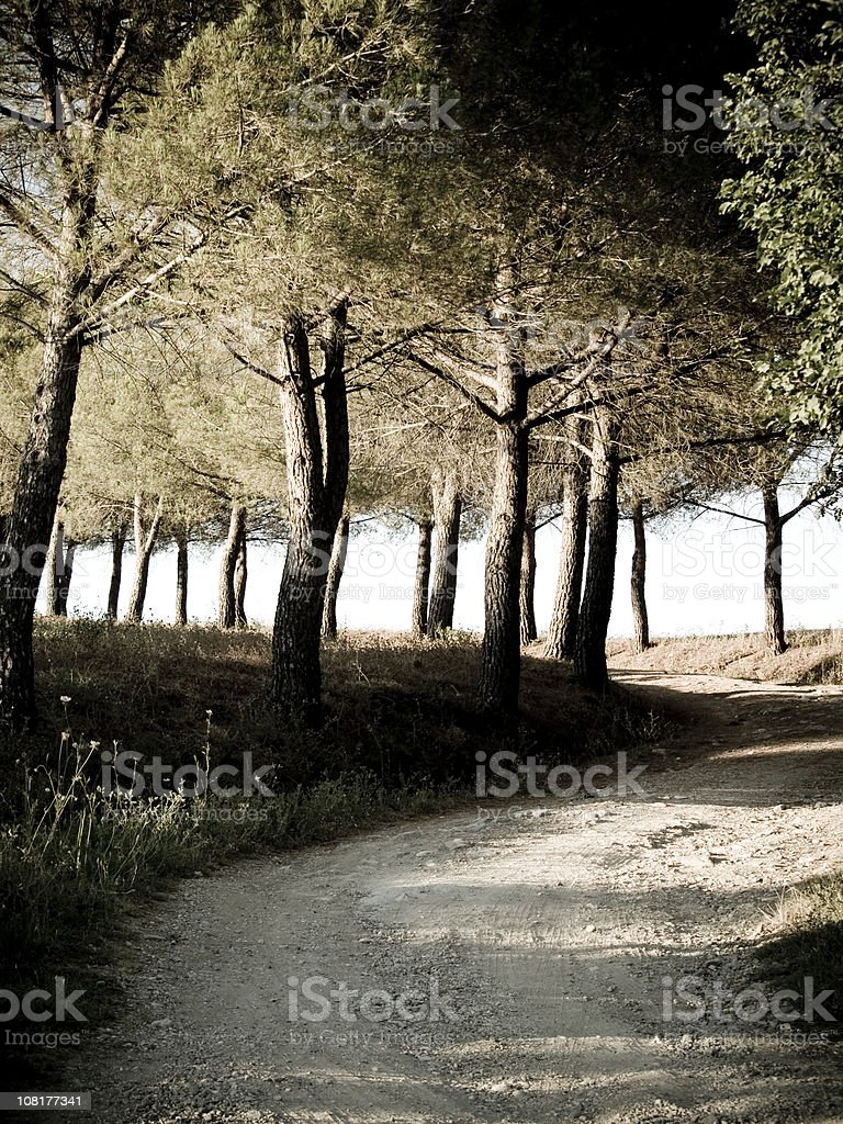 Italian Trees... stock photo