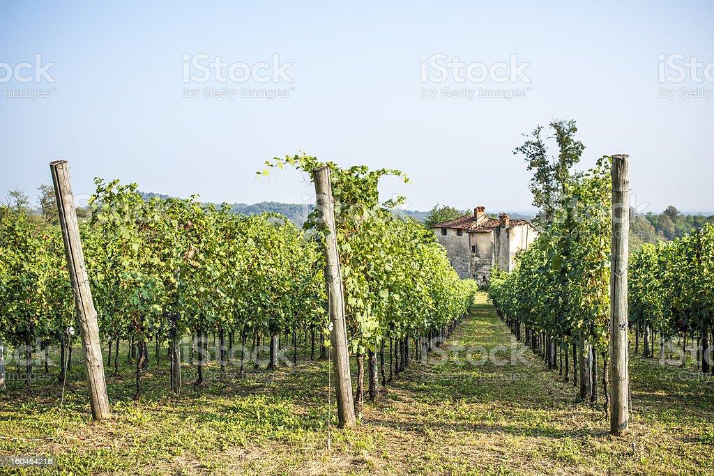 Italian vineyard in autumn stock photo